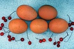 Ovos da galinha e bagas do Viburnum na neve foto de stock