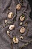 Ovos da galinha e de codorniz com elementos decorativos no fundo preto Imagem de Stock Royalty Free