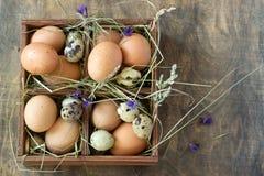 Ovos da galinha e de codorniz em uma caixa de madeira Estilo rústico Foto de Stock