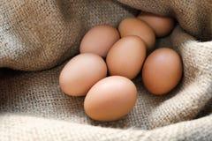 Ovos da galinha/galinha no pano de saco Fotos de Stock Royalty Free