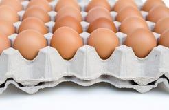 Ovos da galinha na bandeja de papel do ovo Imagem de Stock
