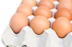 Ovos da galinha na bandeja de papel do ovo Fotografia de Stock