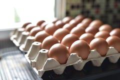 Ovos da galinha na bandeja de papel do poço Fotos de Stock