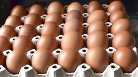 Ovos da galinha na bandeja de papel do poço Imagem de Stock Royalty Free