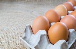 Ovos da galinha na caixa Fotos de Stock Royalty Free