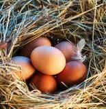 Ovos da galinha na palha Fotos de Stock