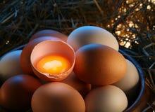 Ovos da galinha na palha Foto de Stock
