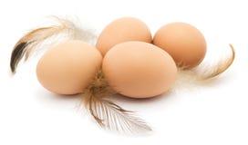 Ovos da galinha, penas, isoladas Imagem de Stock Royalty Free