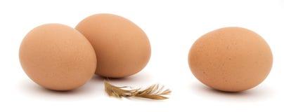 Ovos da galinha, penas, isoladas Fotografia de Stock Royalty Free