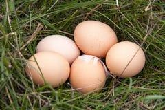 Ovos da galinha que encontram-se em uma grama verde Imagens de Stock