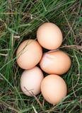 Ovos da galinha que encontram-se em uma grama verde Fotografia de Stock Royalty Free