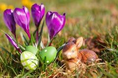 Ovos da páscoa, coelho e açafrões exteriores Fotografia de Stock