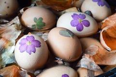 Ovos da páscoa da coloração com cebola foto de stock