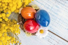 Ovos da páscoa coloridos em um prato branco na forma dos corações e das flores da mimosa em uma tabela de madeira azul Fim acima  Foto de Stock