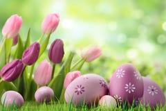 Ovos da páscoa coloridos roxos na grama fotos de stock