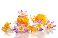 Ovos da páscoa com açafrões Imagens de Stock Royalty Free