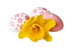 Ovos da páscoa com a flor amarela do narciso amarelo no branco Trajeto de grampeamento incluído da imagem foto de stock royalty free