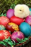 Ovos da páscoa com uma galinha pequena Fotos de Stock Royalty Free