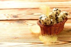 Ovos da páscoa das codorniz Fotografia de Stock Royalty Free