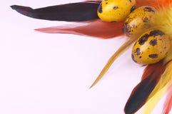 Ovos da páscoa das codorniz decorados com penas coloridas Imagem de Stock Royalty Free