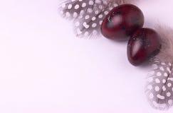 Ovos da páscoa das codorniz decorados com penas manchadas Foto de Stock Royalty Free