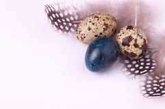 Ovos da páscoa das codorniz decorados com penas manchadas Fotografia de Stock Royalty Free