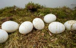 Ovos da páscoa decorados com cera Imagem de Stock
