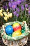 Ovos da páscoa e açafrão Fotos de Stock Royalty Free