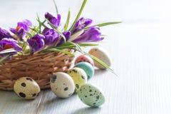Ovos da páscoa e açafrão pintados coloridos da mola Imagens de Stock