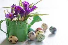 Ovos da páscoa e açafrão pintados coloridos da mola Imagem de Stock Royalty Free