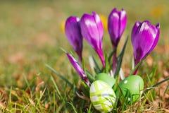 Ovos da páscoa e açafrões exteriores Fotos de Stock Royalty Free
