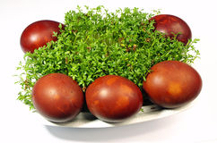 Ovos da páscoa e agrião Fotografia de Stock