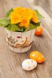 Ovos da páscoa e flor da prímula Fotografia de Stock Royalty Free