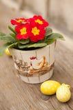 Ovos da páscoa e flor da prímula Imagens de Stock