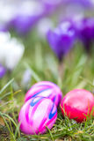 Ovos da páscoa e fundo das flores Imagens de Stock Royalty Free