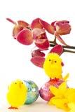 Decorações de Easter com orquídea e pintainhos Fotos de Stock