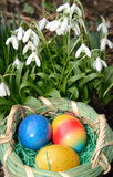 Ovos da páscoa e snowdrop Fotos de Stock Royalty Free