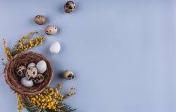 Ovos da páscoa em flores do ninho e da mola no fundo do feriado Fotografia de Stock