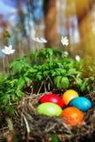 Ovos da páscoa em um cenário da floresta imagens de stock royalty free