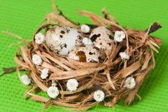 Ovos da páscoa em um ninho com florets Fotos de Stock Royalty Free
