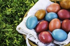 Ovos da páscoa em uma cesta na grama verde, espaço vazio da cópia Fotografia de Stock Royalty Free