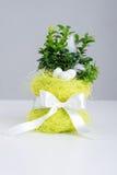 Ovos da páscoa, flowerpot e fita Fotos de Stock Royalty Free