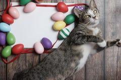 ovos da páscoa da Liso-configuração na tabela de madeira com gato bonito fotografia de stock royalty free