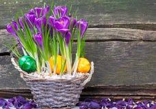 Ovos da páscoa na cesta entre o açafrão Fotos de Stock