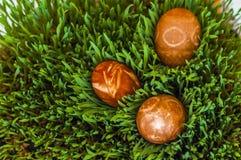 Ovos da páscoa na grama verde fotos de stock royalty free
