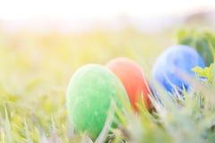 Ovos da páscoa na grama verde com luz do sol Imagem de Stock Royalty Free