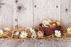 Ovos da páscoa na madeira Fotos de Stock