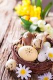 Ovos da páscoa na madeira Fotos de Stock Royalty Free