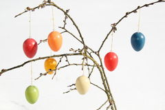 Ovos da páscoa no amentilho Imagens de Stock Royalty Free