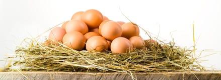 Ovos da páscoa no ninho em pranchas de madeira rústicas. Fundo branco Imagem de Stock Royalty Free